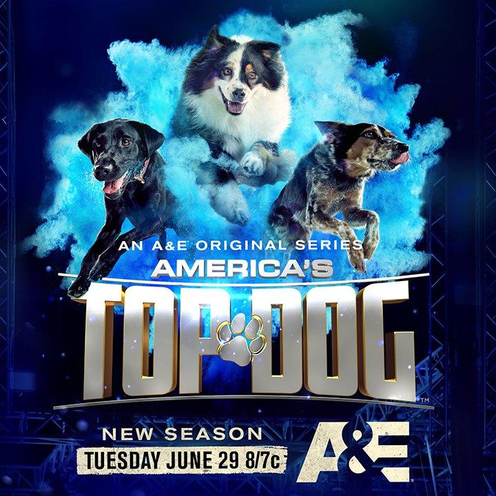 Bertie Americas Top Dog