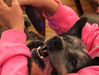 Bertie getting her toenails done